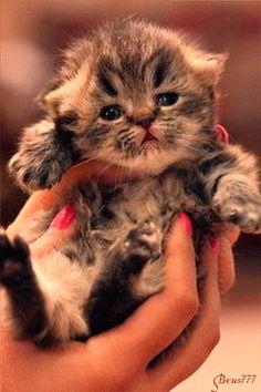 Маленький котенок - анимация на телефон №1269399