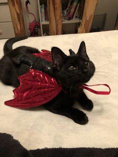 on – Cute – – Katzen Ideen - Baby Animals I Love Cats, Crazy Cats, Cute Cats, Funny Cats, Pretty Cats, Beautiful Cats, Beautiful Snakes, Adorable Kittens, Cute Baby Animals
