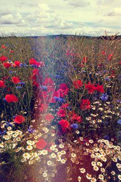 #day #flowers #field