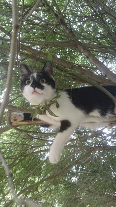 highly aware kitty