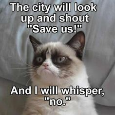 I like this cat, but a lot of the memes are really lame. This one just calls to me.