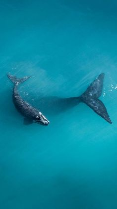 If you're looking for a Whale or Orca gift ideas, look no further. Passport Ocean provides a lot of Whales and Orcas jewelry : Jewelry, Apparel. The Animals, Nature Animals, Strange Animals, Wild Animals, Wild Life, Beautiful Creatures, Animals Beautiful, Wale, Ocean Creatures