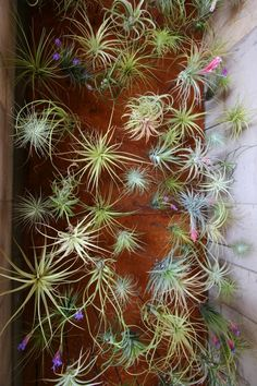 50 creative ideas to display your air plants in a most spectacular way, and how to take care of them.
