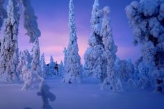 Dépaysement total pour ces entre-fêtes pas comme les autres ! Un hôtel chaleureux en pleine nature pour profiter  de toutes les activités hivernales ! Extension possible à l'Arctic SnowHotel.