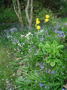 Garden Blogger Bloom Day-April 2016