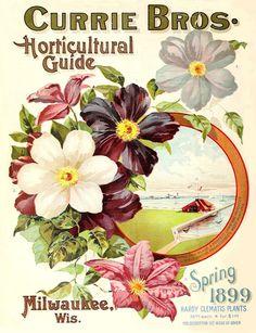 ARTEFACTS - antique images: flower