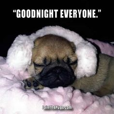 Image result for goodnight quotes pug funny blingee