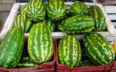 Wassermelonen gedeihen auf Rhodos genauso wie Bananen oder Franipani