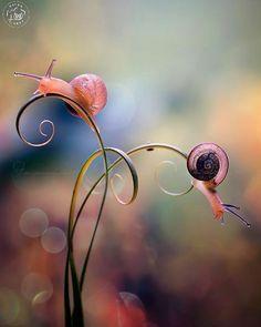 Two Cute Snails (Fauzan Maududdin / Banjarmasin / Indonesia) EOS Macro Photography Tips, Animal Photography, Nature Photography, Levitation Photography, Exposure Photography, Winter Photography, Abstract Photography, Beach Photography, Photography Flowers