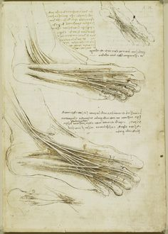 Leonardo da Vinci (Vinci 1452-Amboise 1519) - Recto: The muscles and tendons of the sole of the foot. Verso: The muscles of the lower leg