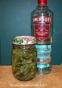 Making Stevia Syrup