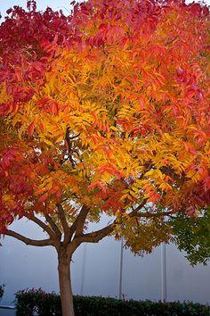 22 Best Trees N Shrubs Images Shrubs Trees And Shrubs Plants