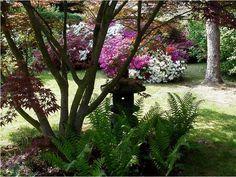 Tuin van mijn Moeke