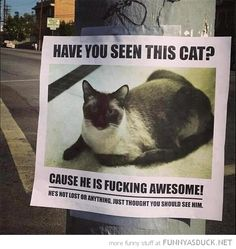 Have you seen this cat ?