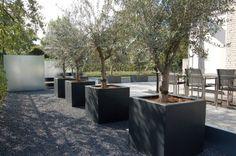 Zwartgrijze plantenbakken van polyester, met grote olijven. geplaatst in basalt split bij een heerlijk tuinterras