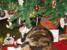 Molly & her tree