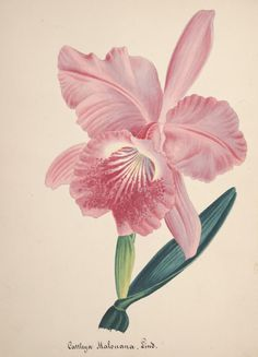 Collection d'orchidées - Biodiversity Heritage Library