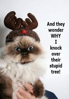 Too funny.. Didn't do that to my cat, still pulled down the tree!!!