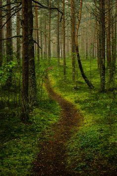 all trees have the same alder....