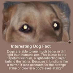 Interesting Dog Facts    http://www.thedogsbark.com/