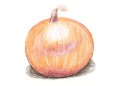 onion, Yellow of Parma | Baker Creek Heirloom Seed Co