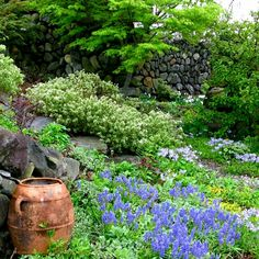Dreaming of violet-blue Muscari and the scent of sweet Phlox and Daphne x burkwoodii in May. thegardenerseden.com