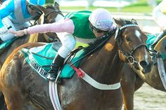 Giant Remex (ARG) 2009 B.m. (Giant's Causeway (USA)-South Remera (ARG) by Southern Halo (USA) 1st Clasico Mexico (ARG-G3,1000mD,Palermo), Clasico Loteria Nacional (ARG-G3,1000mD,Palermo)