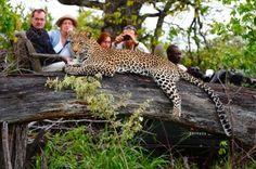 Your personal South Africa travel guide offering up lodges and bespoke travel itineraries to all the areas when looking to travel in South Africa Private Safari, Private Games, Safari Adventure, Game Reserve, Wild Dogs, Leopards, African Safari, Africa Travel, South Africa