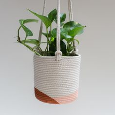 Charming Hanging Plants ideas to Brighten Your Patio – Gardening Decor Plant Basket, Basket Planters, Rope Basket, Diy Planters, Hanging Planters, Planter Ideas, Diy Hanging, Dollar Store Hacks, Dollar Stores