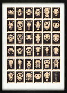 A – Z Skull Print: http://skullappreciationsociety.com/a-z-skull-print/ via @Skull_Society