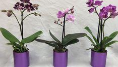 6 fantastických triků jak správně pečovat o odkvetlou orchidej – geniální nápady! | Vychytávkov