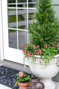 successfully grow shrubs and bushes in containers....even if you don't have a green thumb