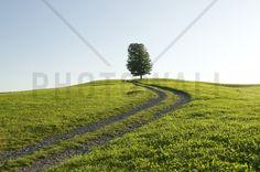 Old Farm Track - Fototapeten & Tapeten - Photowall