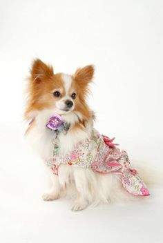 Cuun Cover Dog Model Audition2011