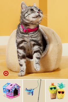 Celebrate your pet's 'Gotcha Day' with dog treats, puppy training toys, cat trees & cute stuff they'll love to play with. Cute Funny Animals, Cute Baby Animals, Cute Cats, Diy Cat Tree, Cat Trees, Gotcha Day, Cat Stuff, Family Activities, Quality Time