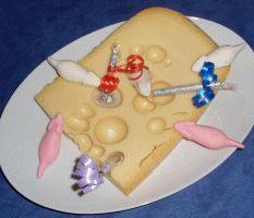 Geldgeschenke basteln - Mäuse im Käse