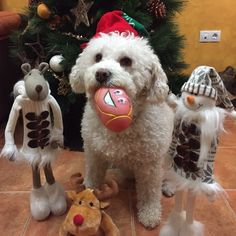 ¡Feliz Navidad! #Navidad #clientes #perros