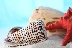 conchas de mar, conchas marinas textura, mar