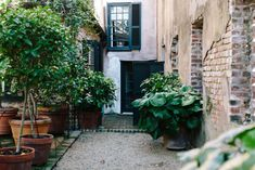 The Charleston, South Carolina City Guide