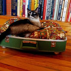 I have a green suitcase just like this! But I'm not too sure my cat would actually sleep on it =/ she usually sleeps on the highest place in the house (the fridge)