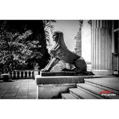 #canon #canon_photos #canon_official #ig_photolove #igfotografer #igglobalclub #myphototime #mood_family #nofilter #perfect #photografer #photooftheday #photograph #photochallenge #throughmyeyes #bnw #monument
