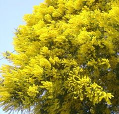 AROMO Shrubs, Green, Flowers