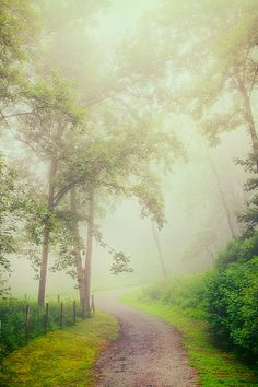 """"""" '✯ Foggy Path - Blue Ridge Parkway' - someone. This road is not the Blue Ridge Parkway (which is paved) but it might be located along it, so thanks for describing where it might be. If someone thinks this road is the Blue Ridge Parkway, please let us know."""" :)"""