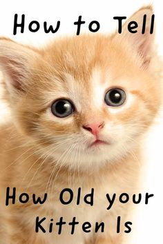 313e70683c How to tell how old your kitten is - Cat Health and Care advice from The