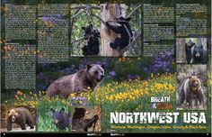 Travel Guide Magazine - Bear Images | Rob Daugherty | Pulse | LinkedIn  https://www.linkedin.com/in/robswildlifeimages/  13 of my Wild Bear images in this magazine  - http://TravelGuideBook.com