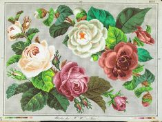 Roses and Camellias corners