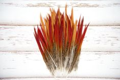 Lady Amherst Pheasant Tail Feathers - Brown Striped Red/ Orange Tipped -