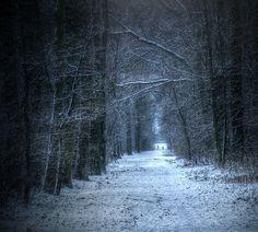 light, road, trees, snow, dark, landscape