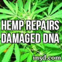 Scientists have discovered astounding new evidence that suggests hemp proteins have the capacity to repair damaged DNA -- a phenomenon that occurs in all humans as the result of aging.