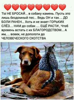 Poem Quotes, Poems, Best Bud, Powerful Words, Animals And Pets, Real Life, Psychology, Friendship, Wisdom